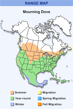 Range Map for Mourning Dove HD
