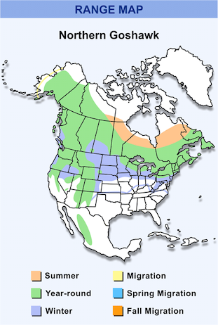 Range Map for Northern Goshawk HD