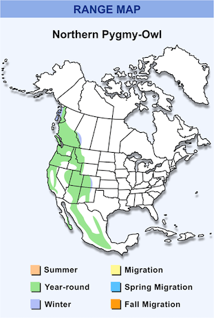 Range Map for Northern Pygmy-Owl HD