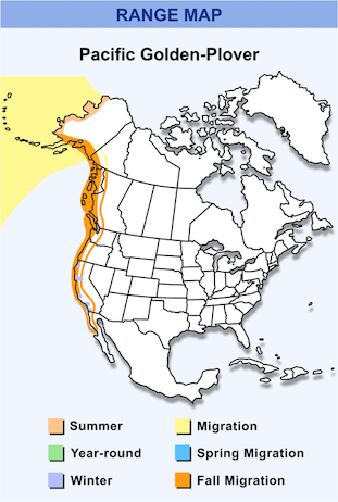 Range Map for Pacific Golden-Plover HD