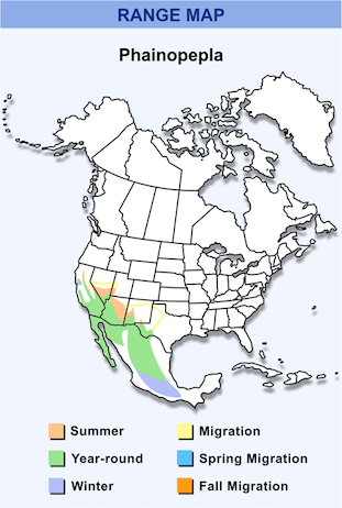 Range Map for Phainopepla HD