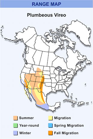 Range Map for Plumbeous Vireo HD