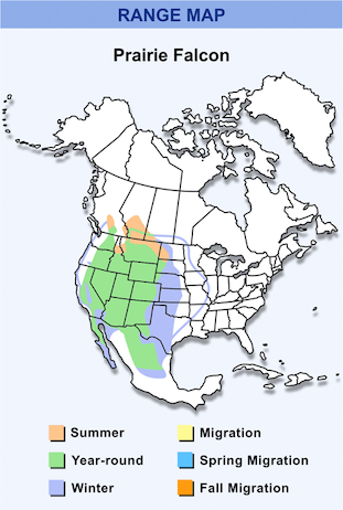 Range Map for Prairie Falcon HD