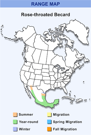 Range Map for Rose-throated Becard HD