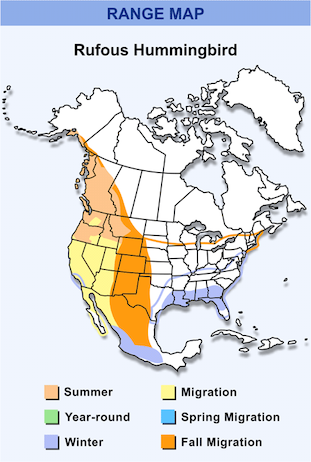 Range Map for Rufous Hummingbird HD