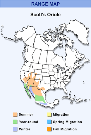 Range Map for Scott's Oriole HD