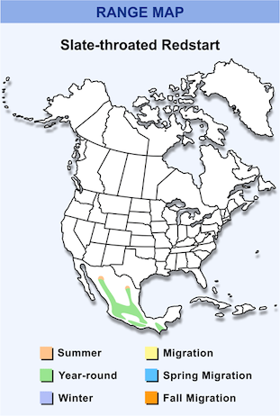 Range Map for Slate-throated Redstart HD