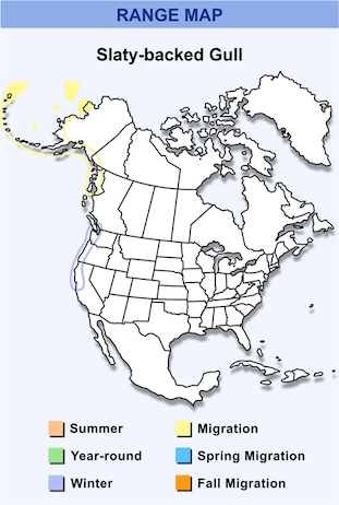 Range Map for Slaty-backed Gull HD