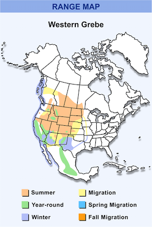 Range Map for Western Grebe HD