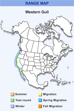Range Map for Western Gull HD