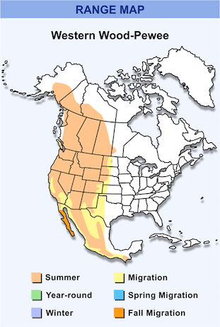 Range Map for Western Wood-Pewee HD