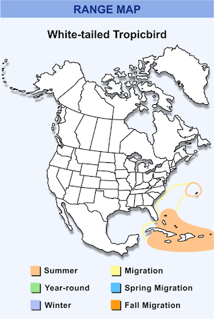 Range Map for White-tailed Tropicbird HD