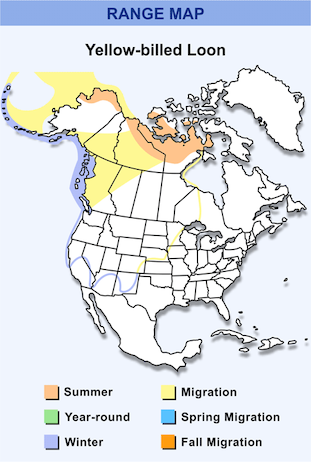 Range Map for Yellow-billed Loon HD