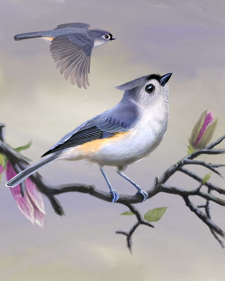 Tufted Titmouse_CEPortrait_1200