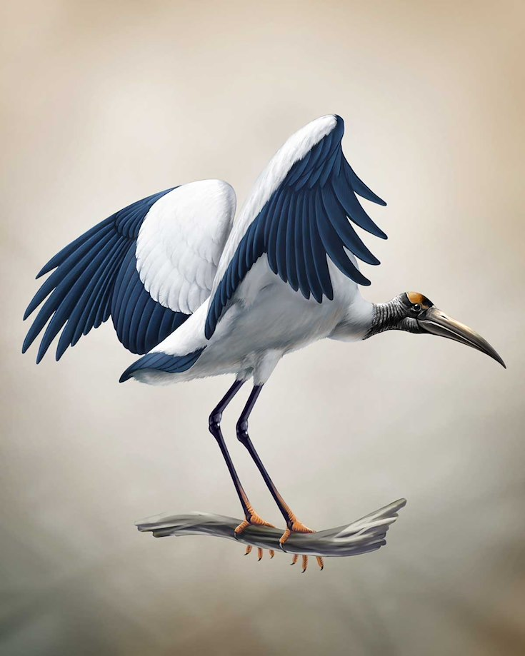 Wood Stork_CEPortrait_1200
