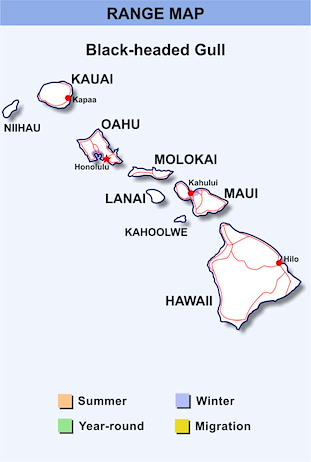 Range Map Hawaii for Black-headed Gull