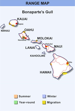 Range Map Hawaii for Bonaparte's Gull