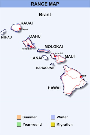 Range Map Hawaii for Brant