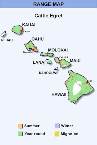 Range Map Hawaii for Cattle Egret