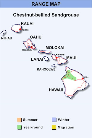Range Map Hawaii for Chestnut-bellied Sandgrouse