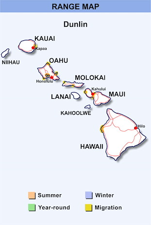 Range Map Hawaii for Dunlin