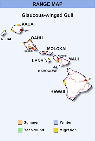 Range Map Hawaii for Glaucous-winged Gull
