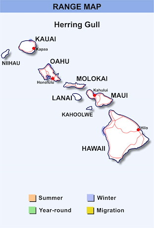 Range Map Hawaii for Herring Gull
