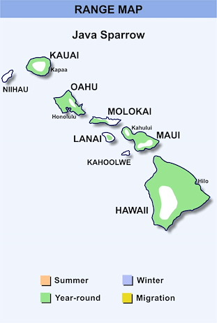 Range Map Hawaii for Java Sparrow