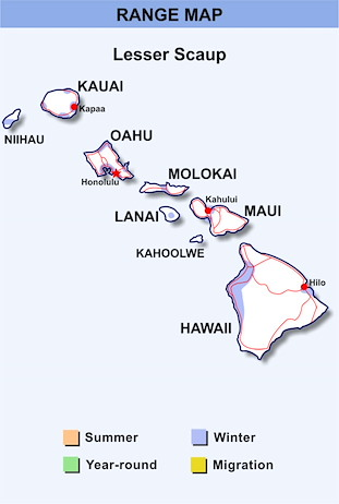 Range Map Hawaii for Lesser Scaup