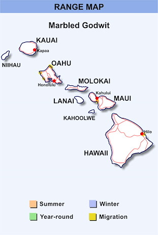 Range Map Hawaii for Marbled Godwit
