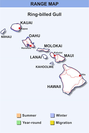 Range Map Hawaii for Ring-billed Gull