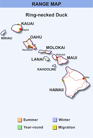 Range Map Hawaii for Ring-necked Duck