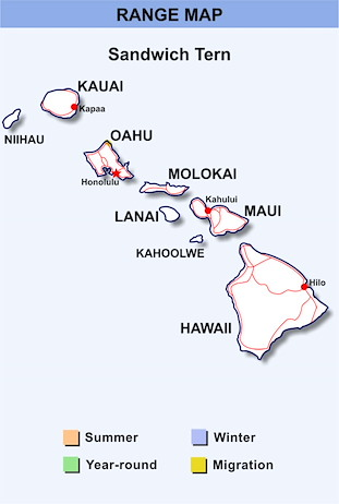 Range Map Hawaii for Sandwich Tern
