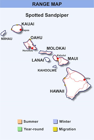 Range Map Hawaii for Spotted Sandpiper