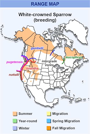 Range Map for White-crowned Sparrow Subspecies (breeding)