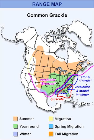 Range Map for Common Grackle Subspecies