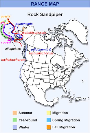 Range Map for Rock Sandpiper Subspecies