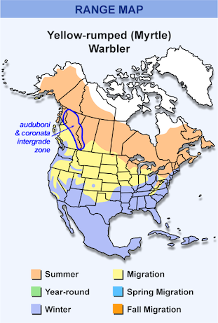 Range Map for Yellow-rumped Warbler, Myrtle Subspecies
