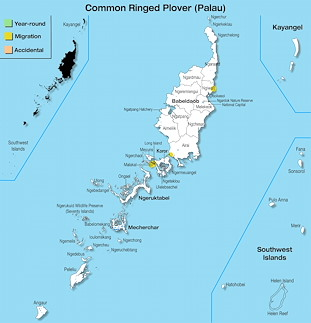 Range Map Palau for Common Ringed Plover (Palau).jpg