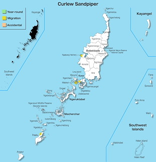 Range Map Palau for Curlew Sandpiper