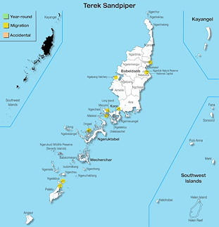 Range Map Palau for Terek Sandpiper