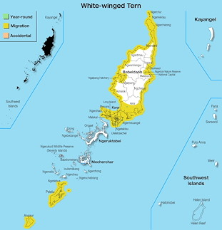 Range Map Palau for White-winged Tern