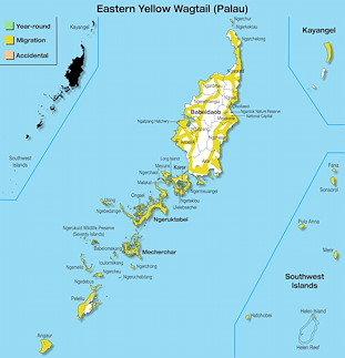 Range Map Palau for Eastern Yellow Wagtail (Palau).jpg