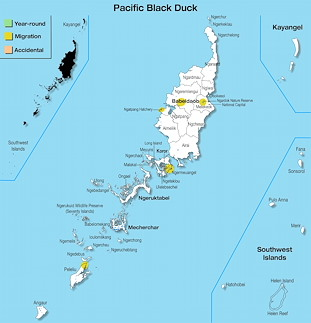 Range Map Palau for Pacific Black Duck