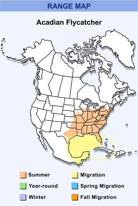 Range Map for Acadian Flycatcher HD