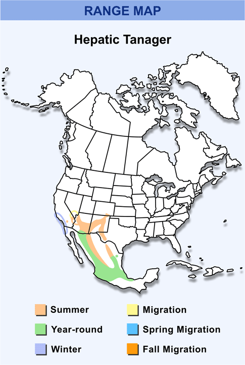 Hepatic Tanager Range Range Map For Hepatic Tanager