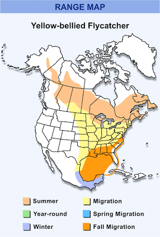 Range Map for Yellow-bellied Flycatcher HD