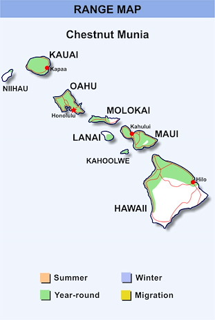 Range Map Hawaii for Chestnut Munia