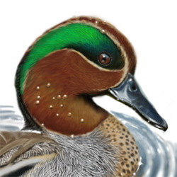 Teal Head Illustration